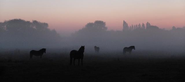 October ponies